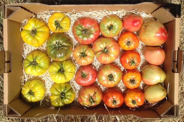 tomates colores